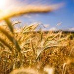 PSR Lazio, 70.000 euro per il primo insediamento per giovani agricoltori